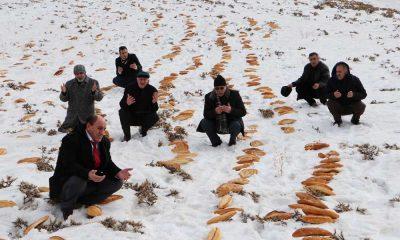 Doğaya yaban hayvanları için 2001 ekmek bırakıp dua ettiler