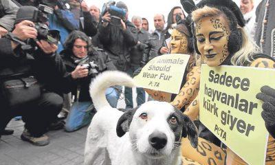 Skandal seminer: Hayvan ve çevre konularına duyarlı olanlar terörist olmaya yatkın!
