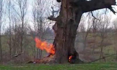 Bu nasıl vicdan! 400 yıllık tarihi çınar ağacını yaktılar