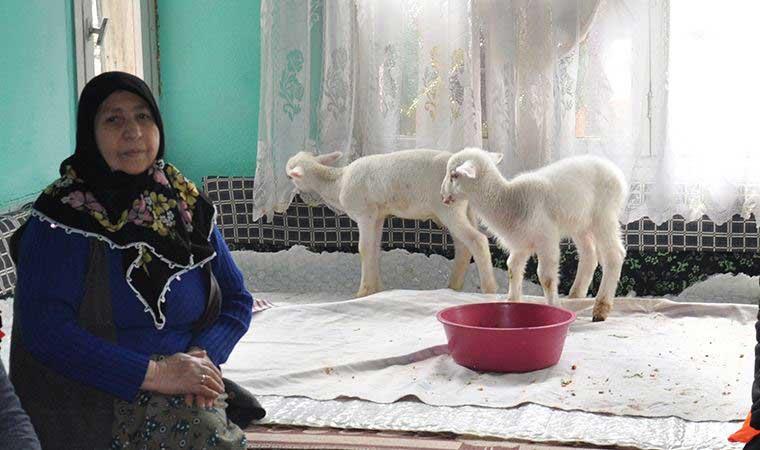 Kuzuları için yem istedi; görevliler torunlarından bahsettiğini sanıp gıda paketi getirdi