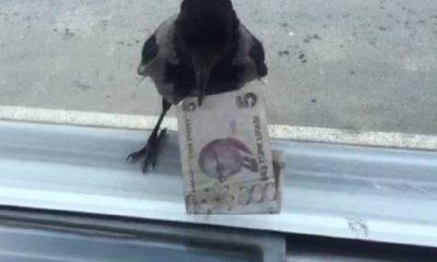 """Hırsız karga"""" bu kez 5 lira ile uçtu"""