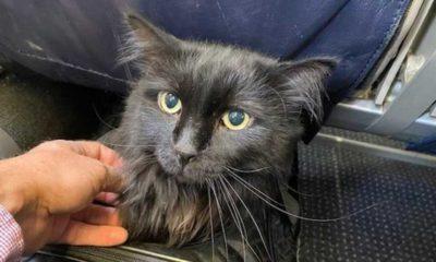 Belçika'da, bir kedinin 'koronavirus' testi pozitif çıktı: Sahibinden bulaştığı düşünülüyor