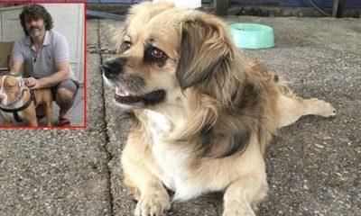Havladı gerekçesi ile 2 köpeği ve sahibini bıçakladılar!