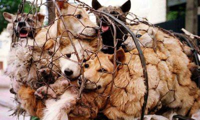 Çin'de kedi ve köpek eti satışı yasaklandı