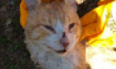 İstanbul'da kedi katliamı: Çok sayıda kedi ölü bulundu
