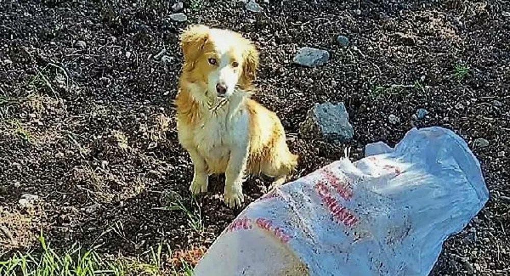 Ağzı bağlı çuvala konan köpek ölüme terk edildi