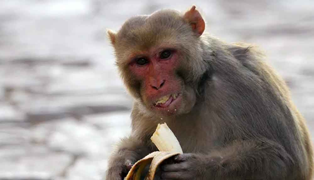 1 kişiyi öldürüp 250 kişiyi yaralayan alkolik maymun müebbet hapse mahkum edildi