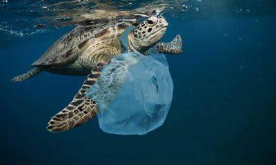 2050'de okyanuslardaki plastik atıkların miktarı balıkları geçebilir