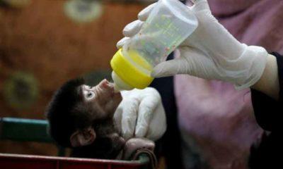 Batı Şeria'daki hayvanat bahçesinde, sokağa çıkma kısıtlamalarında doğum patlaması