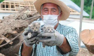 Bingöl'deki depremden 5 gün sonra 2 yavru kedi enkazdan sağ çıkarıldı