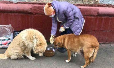 Karantina sırasında Rusya'daki sokak hayvanlarına nasıl bakıldı, nasıl hayatta kaldı?
