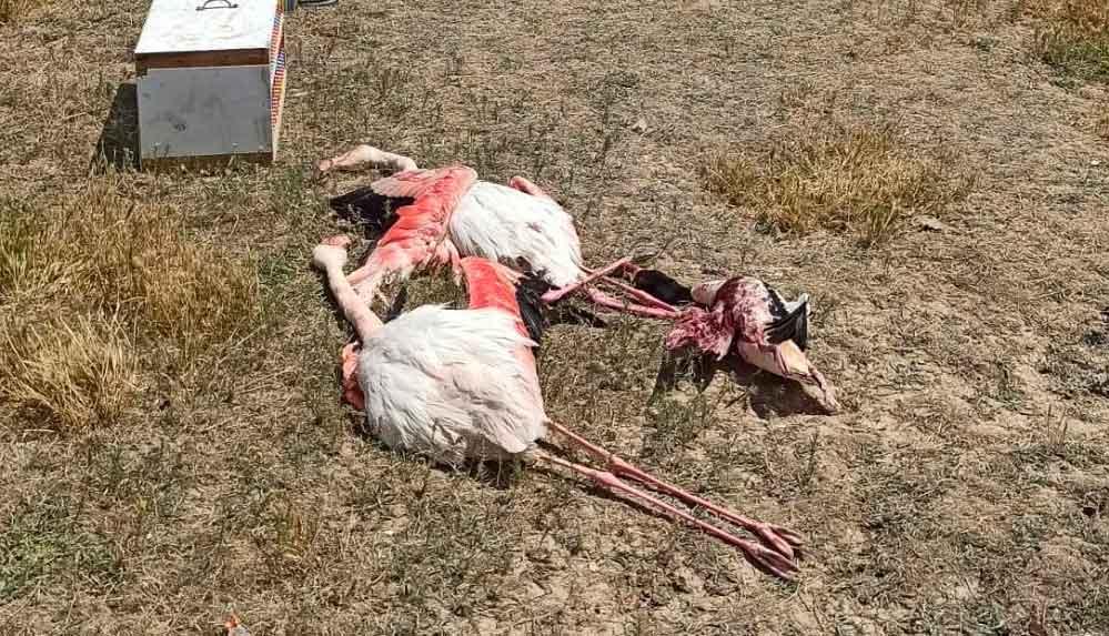 Konya'da 2 flamingo ve 1 suna kuşunu tüfekle katleden şahısa para cezası