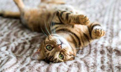 Veteriner psikolog: Eski günlere dönüldüğünde birçok evcil hayvan yalnızlık kaygısı yaşayacak