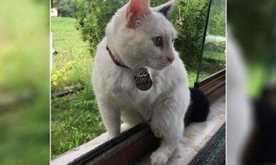 Bahçede yaşayan engelli kedi 'Sütlaç'ı silahla vurarak öldürdüler