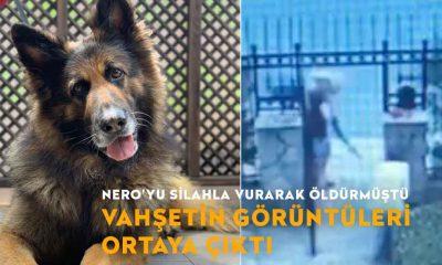 Eşini ısırdığı için köpek Nero'yu öldürdüğünü iddia etmişti, vahşetin görüntüleri ortaya çıktı