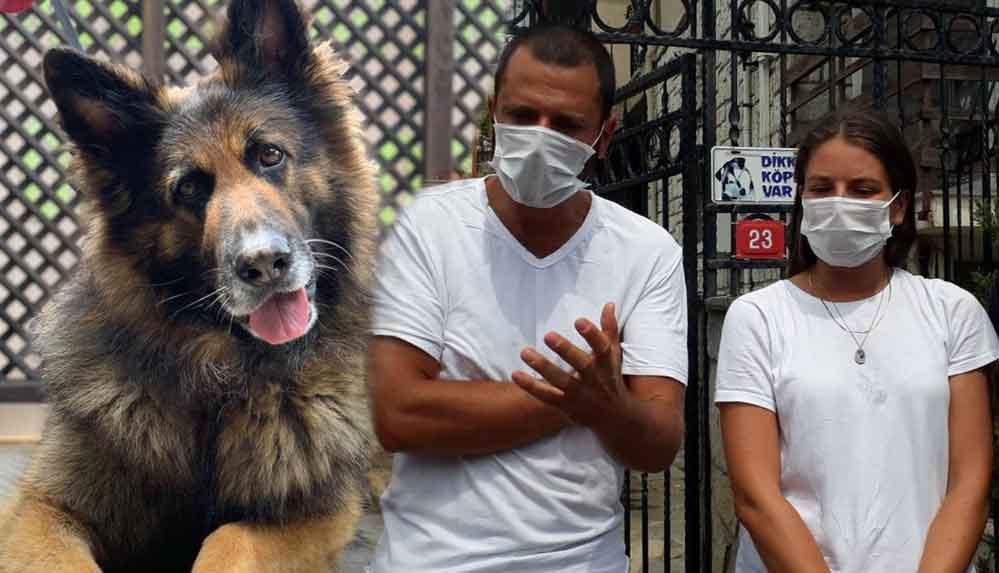 Sarıyer'de silahla öldürülen köpek 'Nero'nun sahipleri konuştu