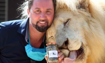 Almanya'da bir sirk pandemi sırasında aslan ve kaplan dışkılarını kavanozlayıp satıyor