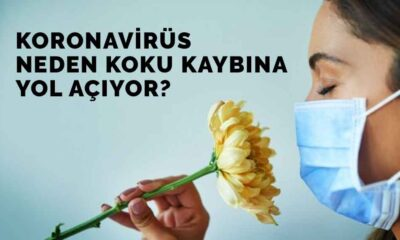 Koronavirüs neden koku kaybına yol açıyor?
