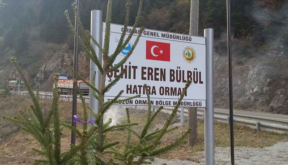 Şehit Eren Bülbül'ün anısına dikilen fidanlar büyüyor