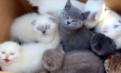 Beşiktaş Belediyesi, evcil hayvan ticaretini resmen yasakladı