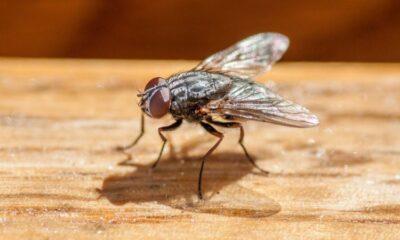 Eve giren sineği öldürmek isterken evini havaya uçurdu