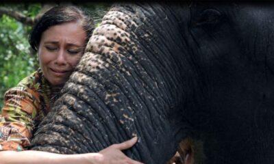 Hindistan'daki tapınak fillerini kurtarmaya çalışan kadının mücadelesi