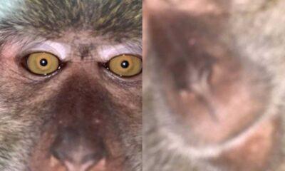 Kaybolan telefonunu bulan adama güldüren sürpriz: Maymun selfie'leriyle dolu galeri