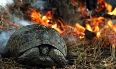 Bu yıl 2 bin 792 orman yangınında 13 bin hektar orman içindeki canlılarla birlikte kül oldu