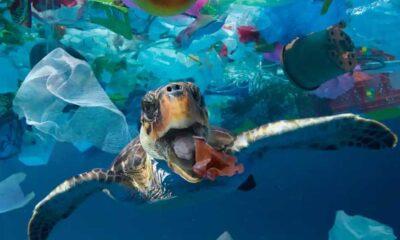Okyanusların dibinde en az 14 milyon ton plastik var