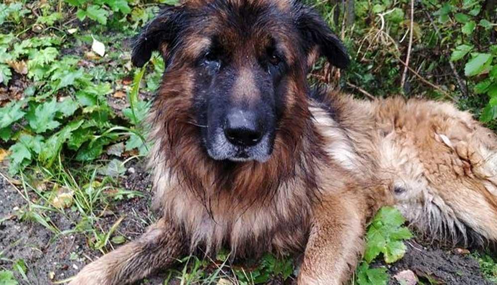 Sahiplerinin canlı canlı gömdüğü köpek toprağı kazarak kurtuldu