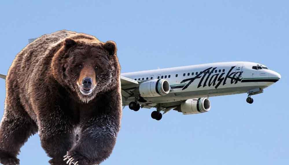 Alaska'da uçak, boz ayıya çarptı