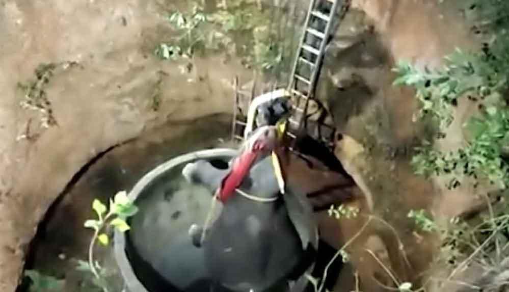 Hindistan'da çukura düşen yavru fil için seferberlik: 16 saatte kurtarıldı