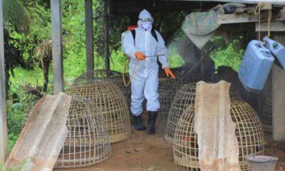 İngiltere'den korkutan açıklama: H5N8 salgını tespit edildi