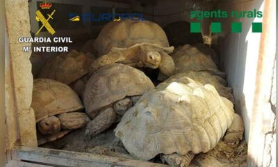İspanyol polisi, kaplumbağa kaçakçılığı çetesini yakaladı
