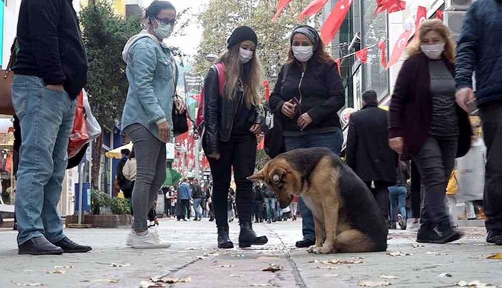 İzmit'te mazgalı izleyen köpek itfaiyeyi harekete geçirdi