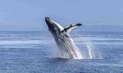 Kambur balina az kalsın kanocu iki kadını yutuyordu