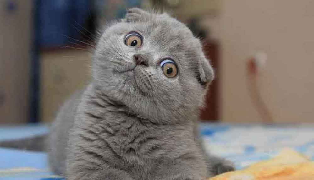 Kedilerin miyavlamasını çevirip ne anlama geldiğini söyleyen uygulama geliştirildi