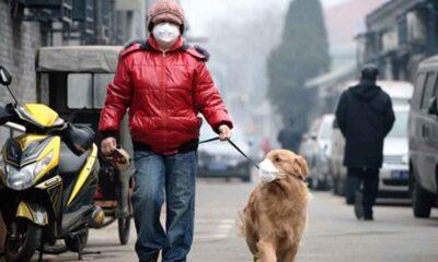 Köpek gezdirmeyi yasaklayan Çin, şimdi de yakalananların köpeğini öldürecek