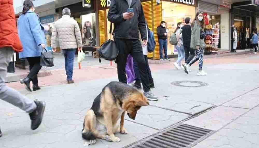 Mazgalı izleyen köpeğin ne için beklediği ortaya çıktı