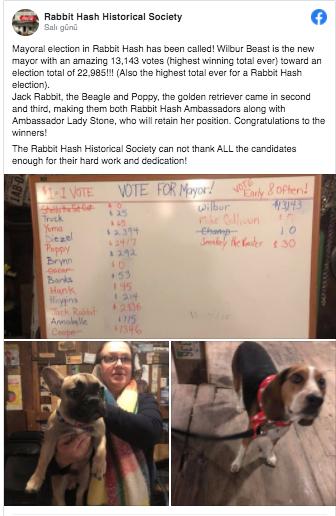 Wilbur Beast isimli köpek ABD'de bir kasabanın belediye başkanı oldu