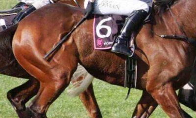 Yeni araştırma ortaya koydu: Atlar kırbaçlanınca insanlar kadar acı çekiyor