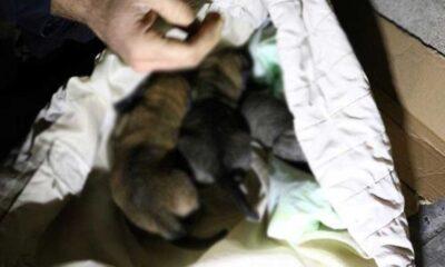 Ankara'da altı köpek zehirlenerek öldürüldü!