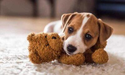 En güzel erkek köpek isimleri