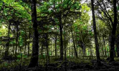 Fransa'da eski kocası tarafından şiddet gören Yasemin Çetindağ'ın cansız bedeni ormanda bulundu