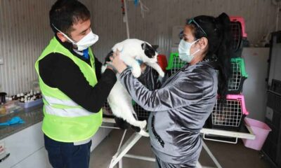 İzmir depreminden kurtarılan 8 kedi, Haluk Levent'in kurduğu Ahbap Platformu'na emanet