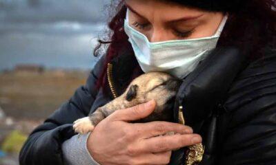 Konya'da 9 yavru köpek yakıldı