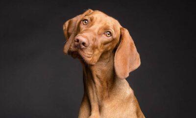 Köpekler insan yılıyla gerçekten kaç yaşında?
