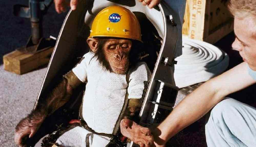 NASA bir günde bünyesindeki 27 maymunu öldürdü