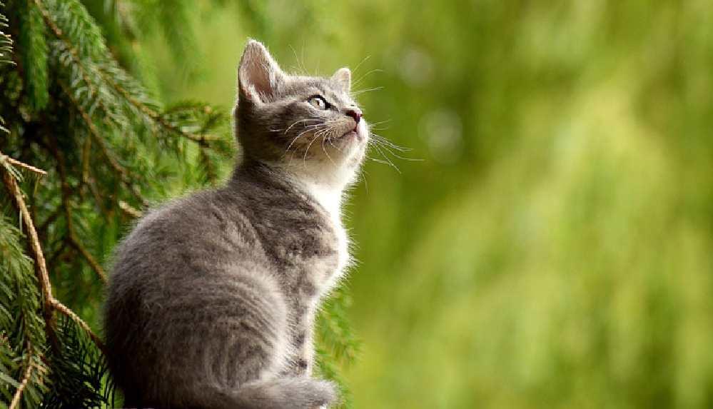 Ölümden son anda kurtulan kedi, 'çevre bakan yardımcısı' oldu