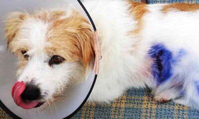 Sakarya'da köpeği tavuklara saldırdığı gerekçesiyle tüfekle vurdular